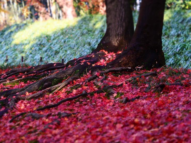 後楽園の紅葉14