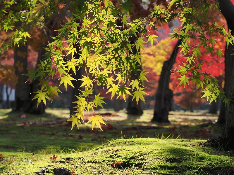 後楽園の紅葉23