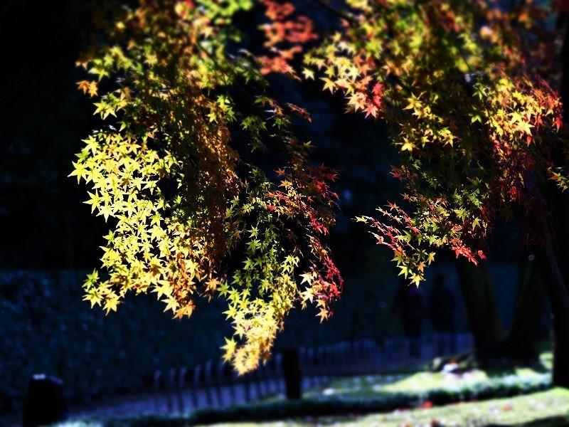 後楽園の紅葉26
