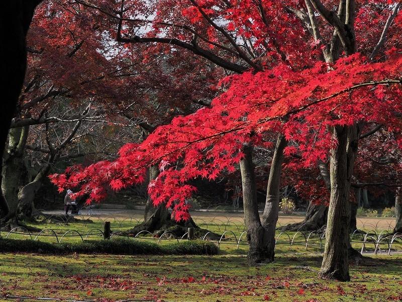 後楽園の紅葉25