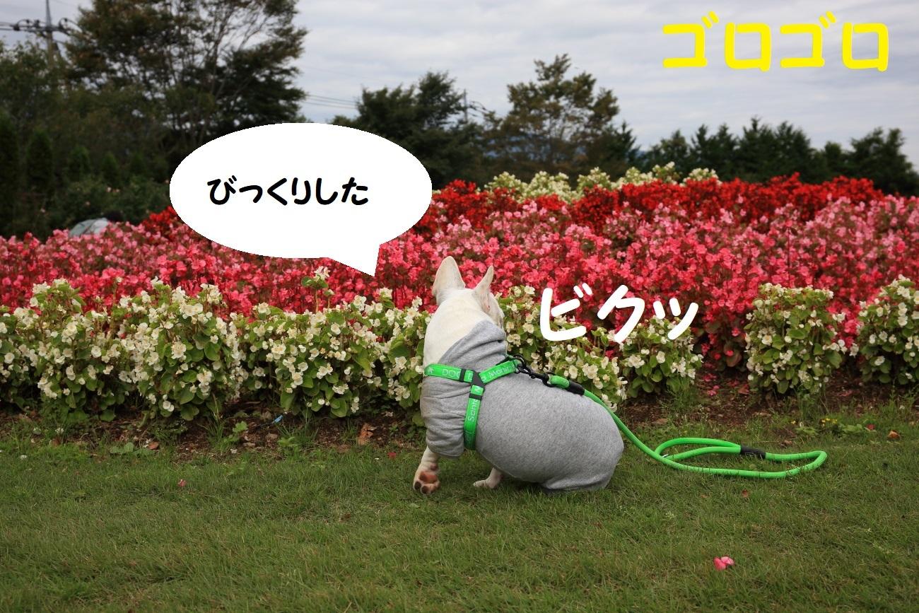 10_2017102402214169f.jpg