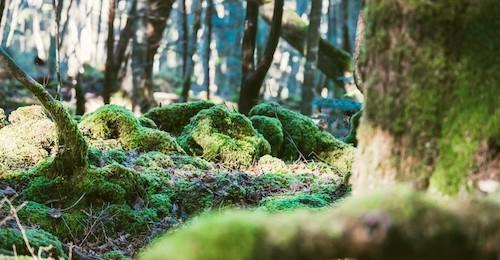 201606_aokigaraha-forest_9-500x260.jpg