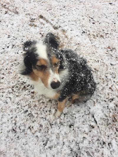 雪かいと1