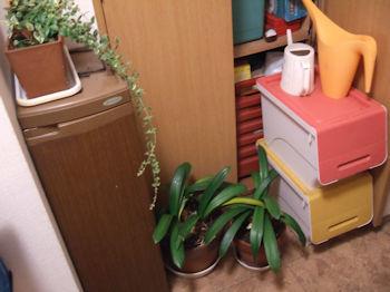 10/29 植木、ガーデニング用品などは玄関スペースに