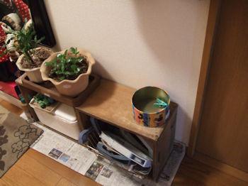 10/29 植木、その他などは玄関スペースに