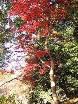 12/7 皇居 二の丸庭園周辺の紅葉