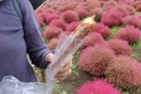 10/14  コキアの丘で干し芋ドーナツ  ひたち海浜公園