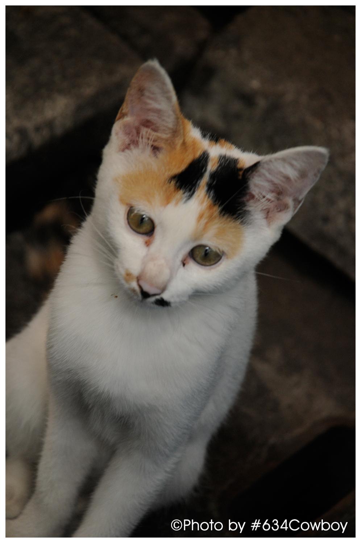下町で撮影した猫 其の壱 写真