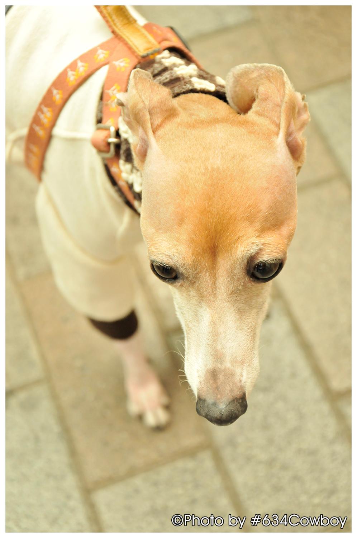 赤羽で見かけた犬 写真