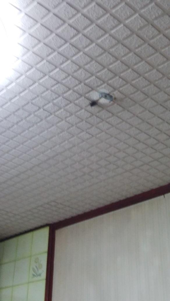 天井のやべーやつ