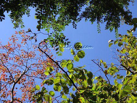 青空に切なくも枯れ行く樹々 1