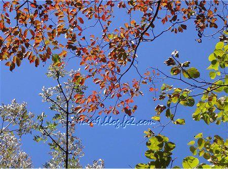 青空に切なくも枯れ行く樹々 2