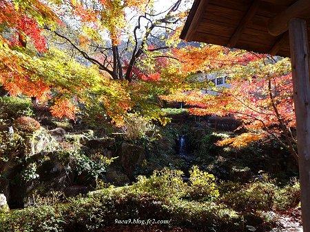 岐阜公園の紅葉 11月 2