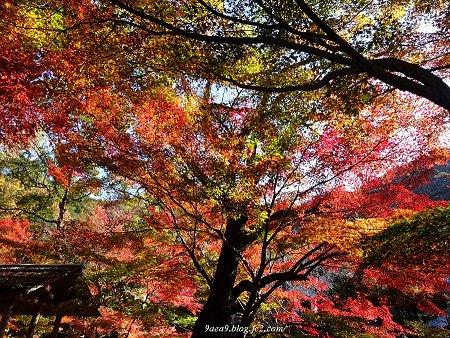 岐阜公園の紅葉 11月 3
