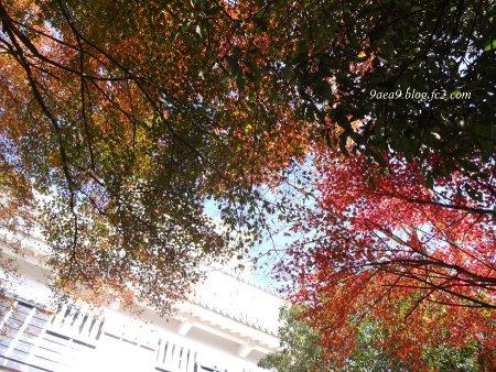 岐阜城の紅葉 2