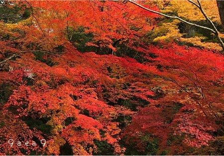 滋賀県の紅葉 ぼ 1