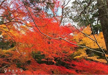 滋賀県の紅葉 ぼ 2