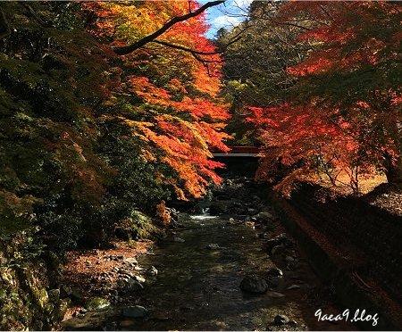 友人からもらった滋賀県の紅葉