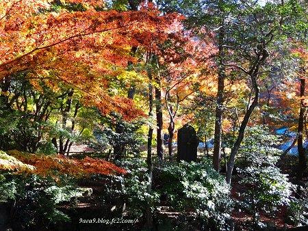 岐阜公園の紅葉 小さい方