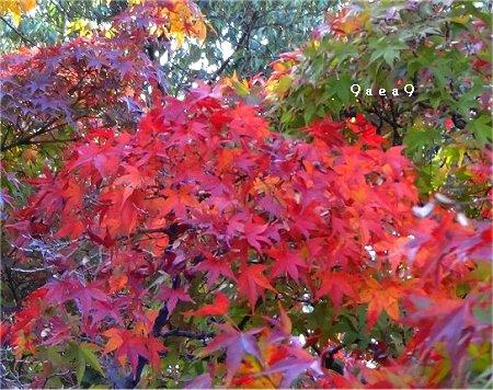 紅葉のお写真 1