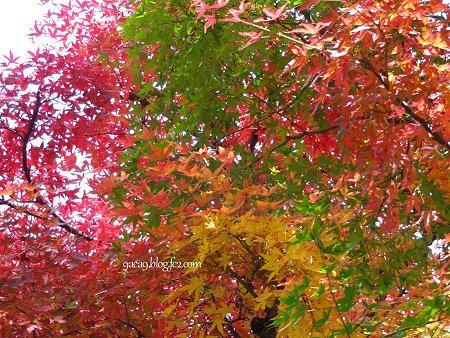 紅葉のお写真 2