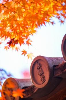 2017_kyoto_koyo_15.jpg