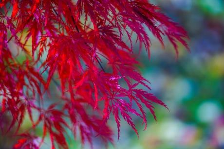 2017_kyoto_koyo_33.jpg