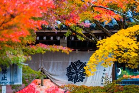2017_kyoto_koyo_36.jpg