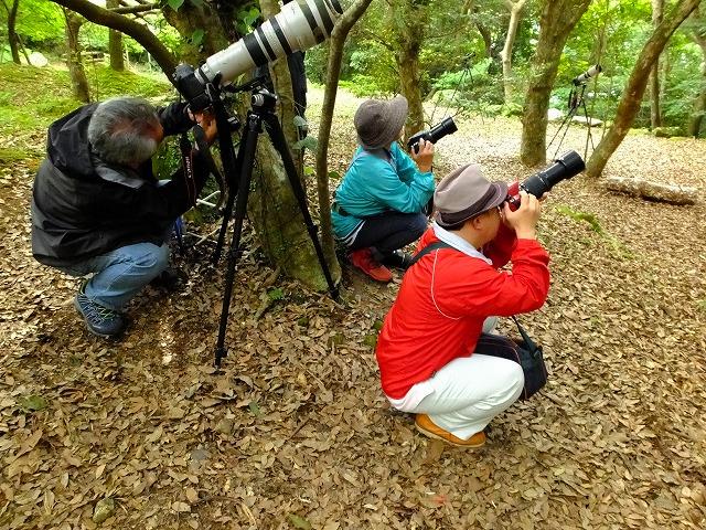 奄美自然観察の森でバードウォッチング