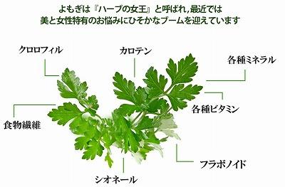 yomogi3_20171017214957570.jpg