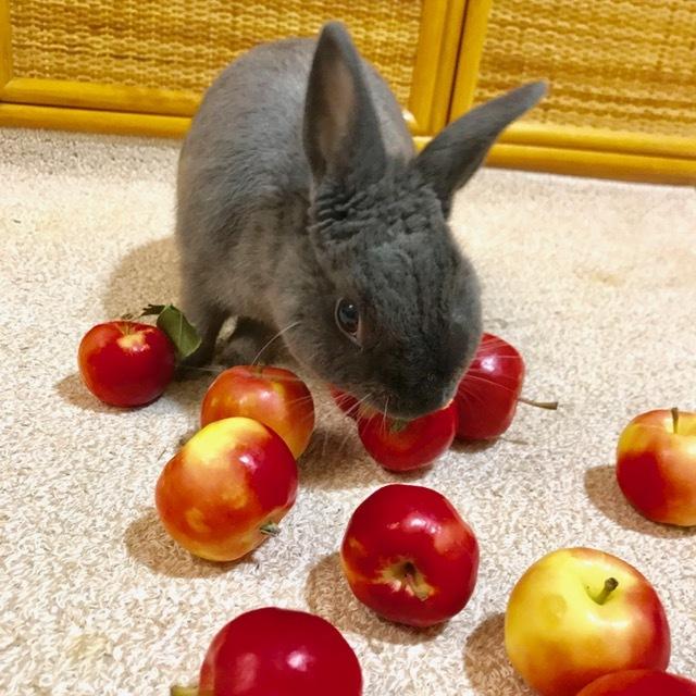 こうめとりんご2017 ①