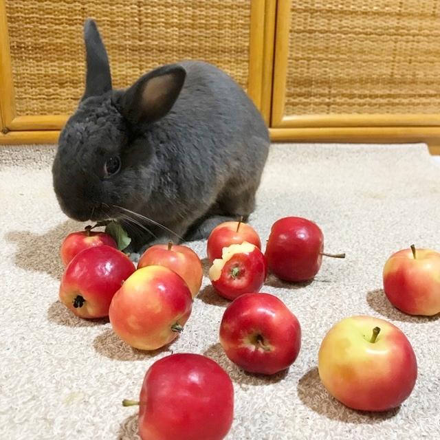 こうめとりんご2017 ②