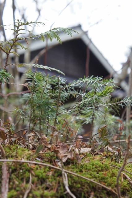 軽井沢聖パウロ教会 1