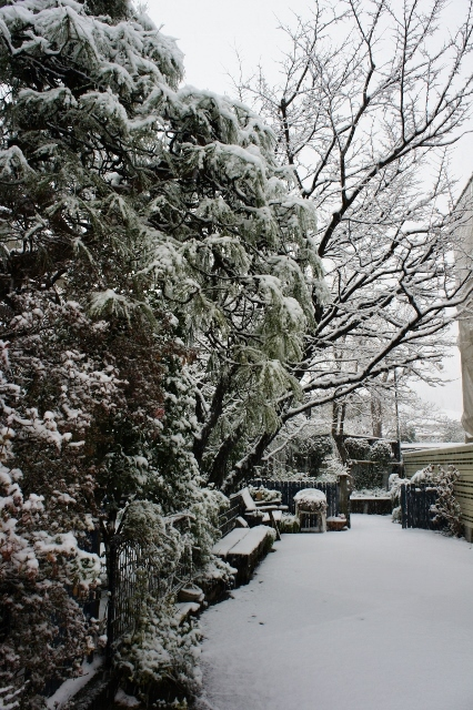 20180122大雪近所 ②