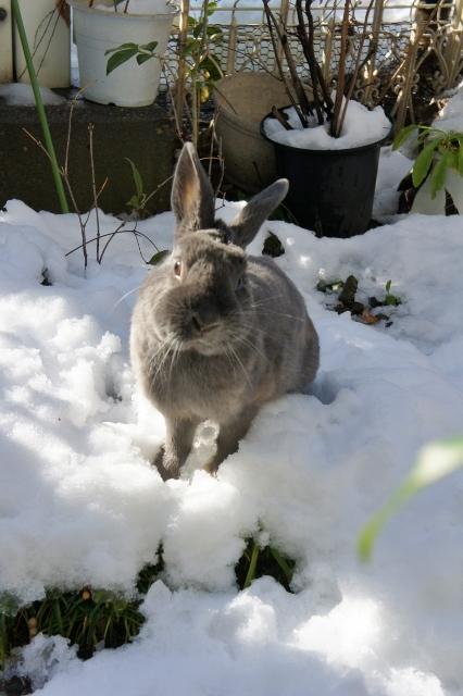 雪の朝2018 ⑬