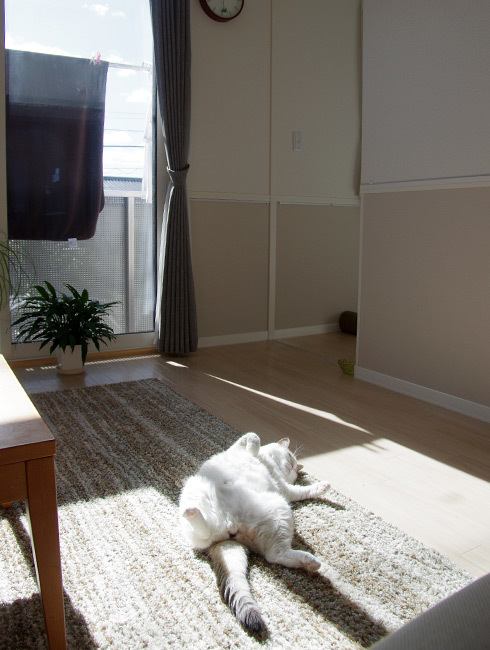 移動する猫の開き