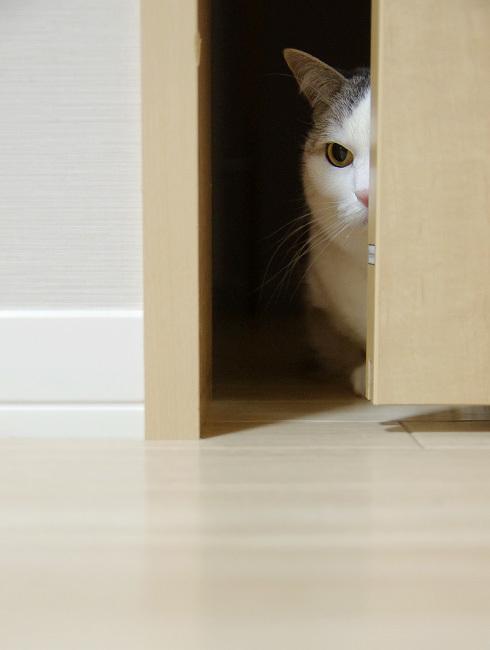 猫の不可解な行動
