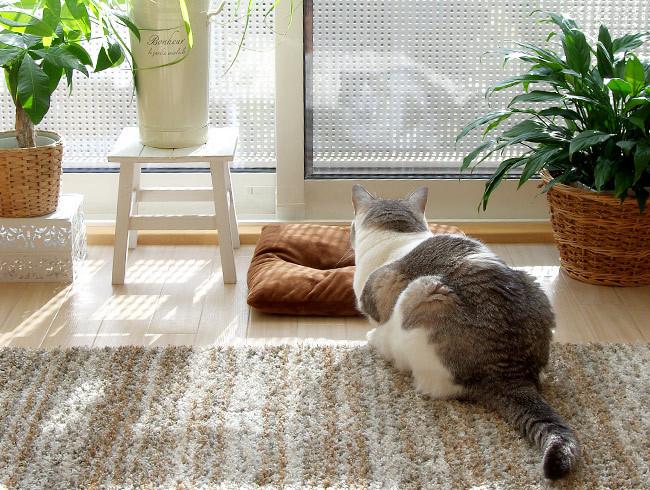 猫はだいたい期待を裏切る