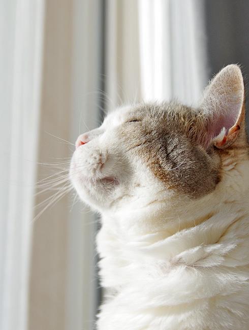 窓辺の猫に付き合い損