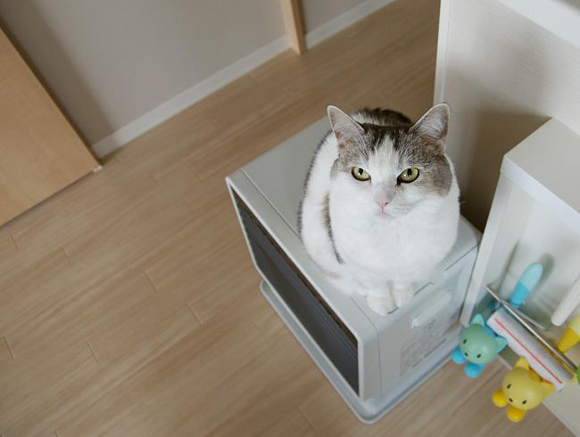 天板のうっとり猫