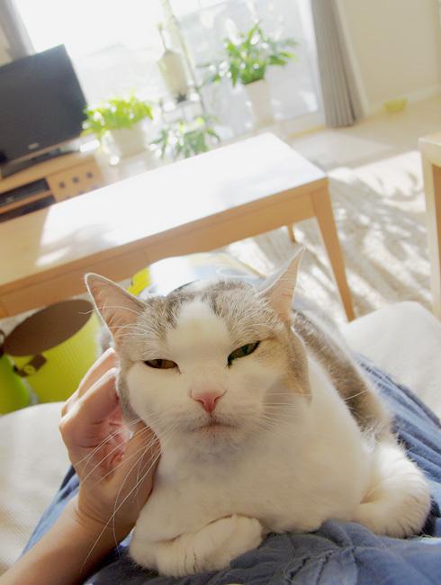 膝の上の猫はカワイイ…?
