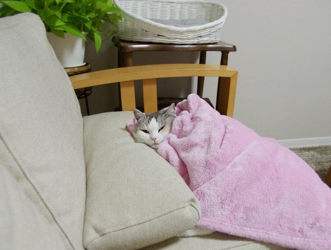 猫を毛布でくるむ季節