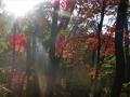 晴れ間の紅葉