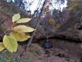 チドリノキと化石滝