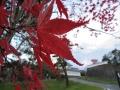 隅櫓と紅葉