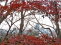 まだ紅い楓の窓から
