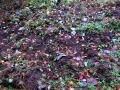 イノシシが耕した跡