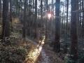 檜林の夕陽
