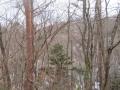 静かな森の片隅