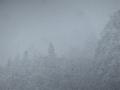 雪降り始め